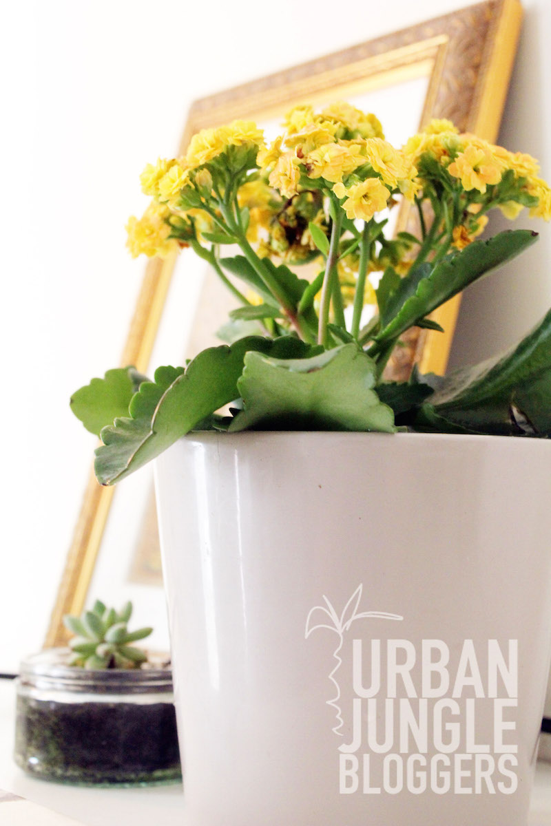 Urban Jungle Bloggers Winter Bedroom Baby Succulent and Yellow Kalanchoe