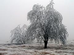 Fagnes hivernales