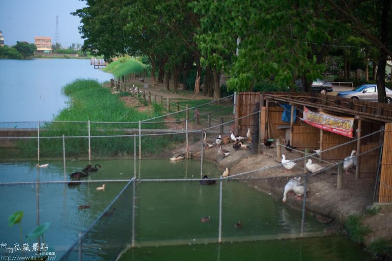 台南私藏景點-新營天鵝湖 (14)