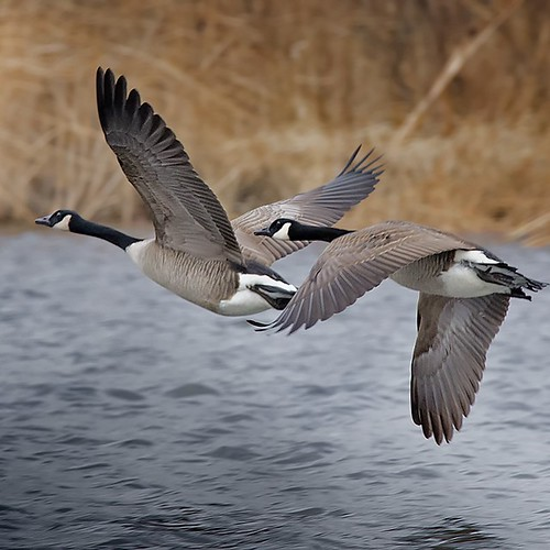 fm_cold_geese_south_122314