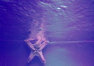 angry starfish