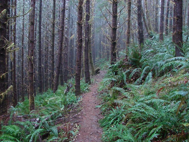 North Loop - Drift Creek Falls Trail