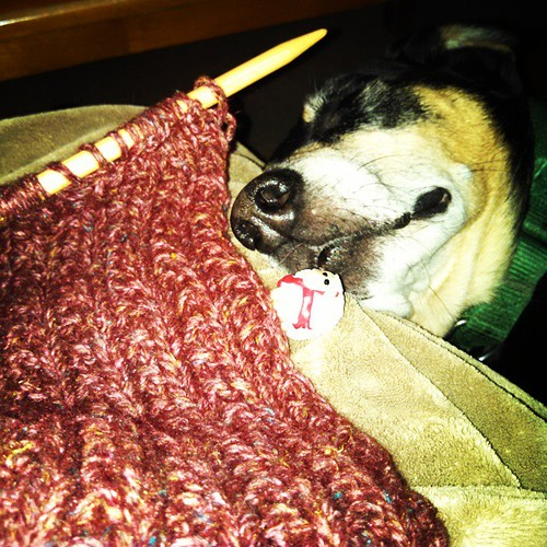 Digging through the #UFO basket... Time to finish my Amelia #scarf in uber soft #DebbieBliss Winter Garden baby llama/merino/silk/linen #yarn with a little help from sleepy Tut. #knitstagram #operationfinishprojects #dogstagram #instadog