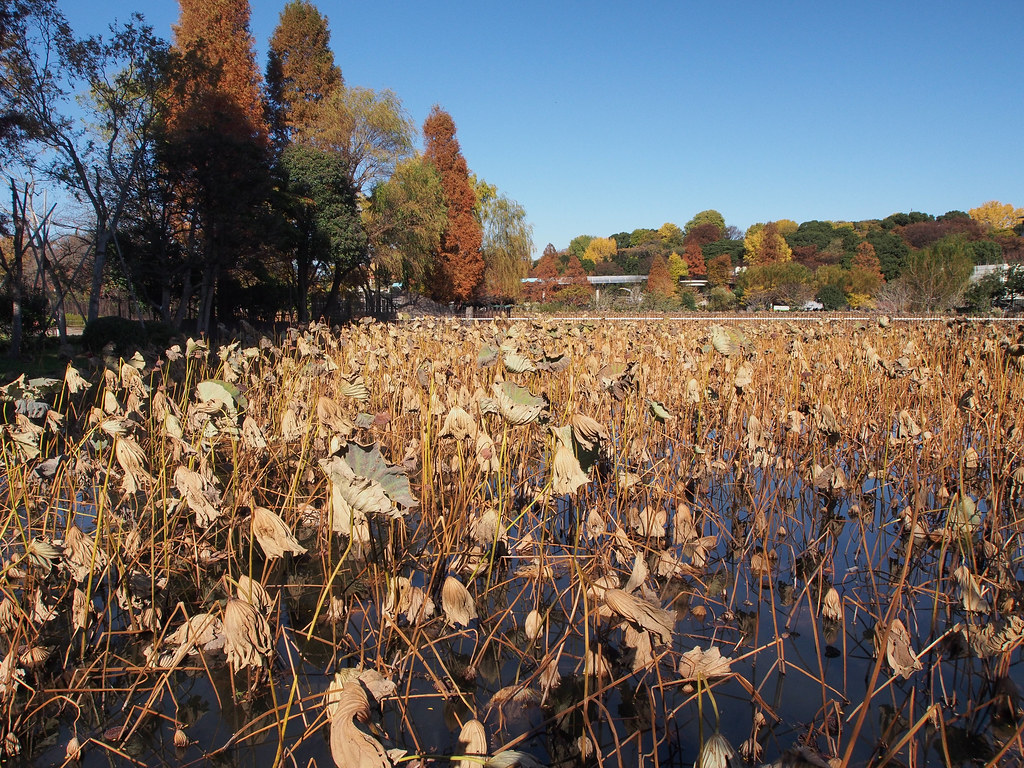 上野公園 Ueno Park