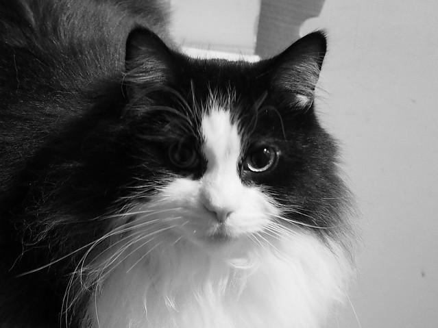 Roly Le Chat Noir