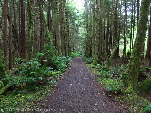 The beginning of the trail through the rainforest to Third Beach, Olympic National Park, Washington