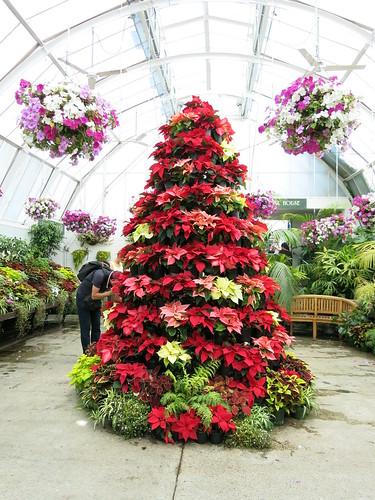 Botanics Gardens Christmas tree