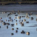 Birds at Yarmouth