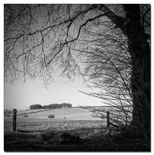 blackandwhite monochrome rollei landscape fuji neopan wiltshire marlboroughdowns acros100 rockley epsonv700 rodinalr09
