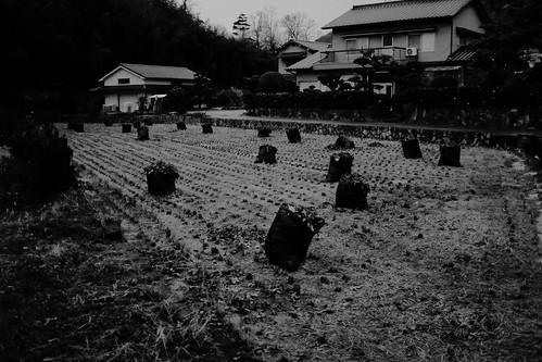 Field / 畑