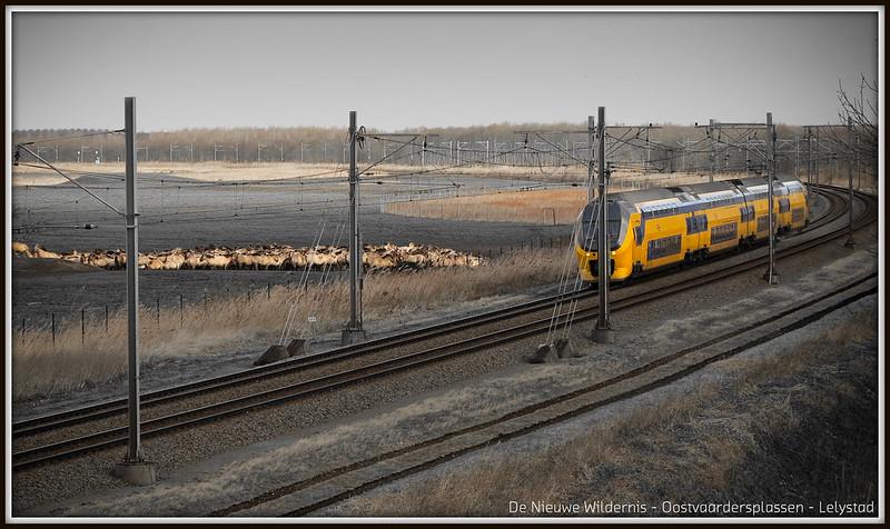 De Nieuwe Wildernis (11-01-2015).