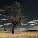 National Park De Hoge Veluwe by ed mather