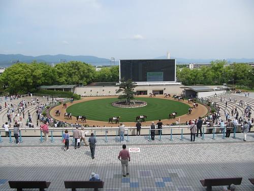 3階から眺めた京都競馬場のパドック