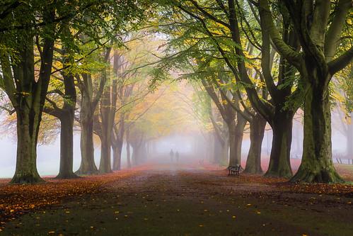 autumn trees mist fog