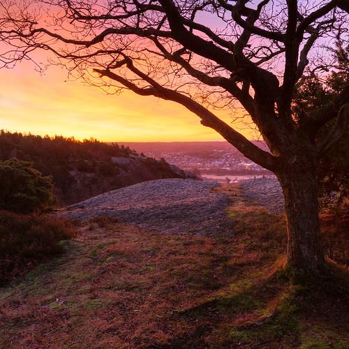 tree clouds sunrise göteborg dawn warm colours view sweden gothenburg lookout sverige canonef24105mmf4lisusm västragötalandslän canoneos6d fjällbo