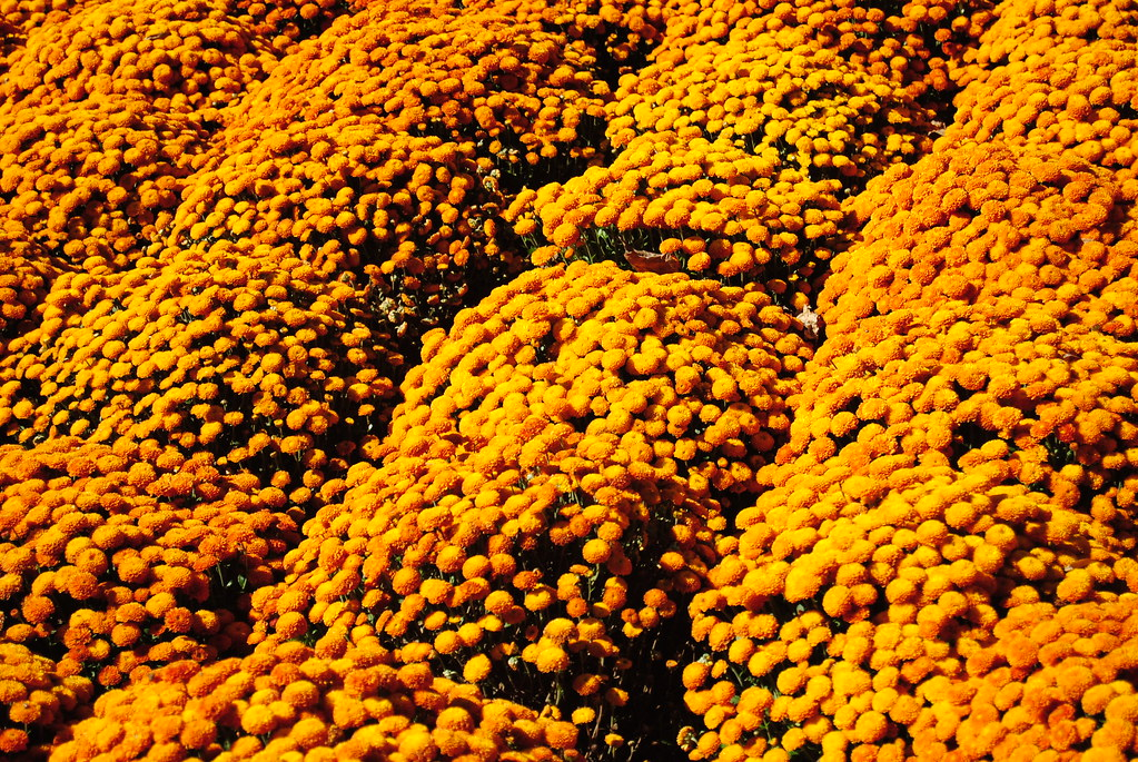 Biltmore Estate fall flowers