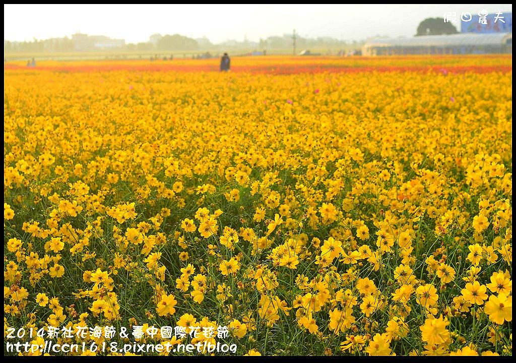 2014新社花海節&臺中國際花毯節DSC_4839