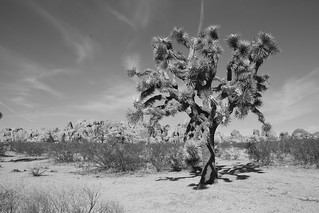 Joshua Tree NP, California.