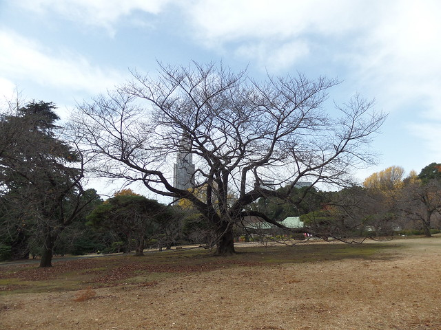 Bare Tree in Shinjuku Gyoen Garden