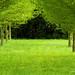 trees by sayiamnk
