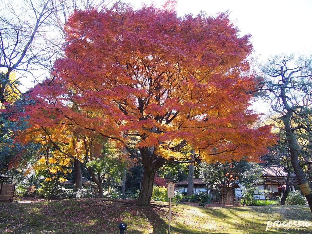Rikugi-en (Rikugien Garden) TOKYO_0007