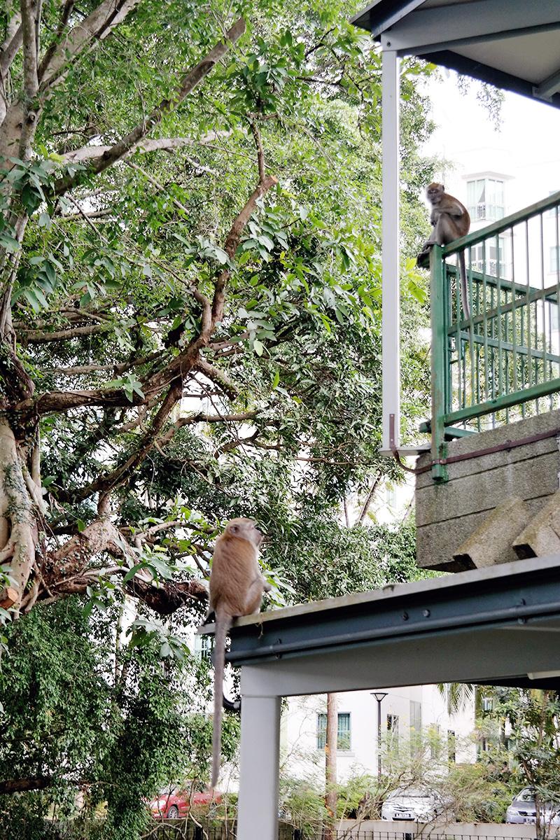 monkey bus stop