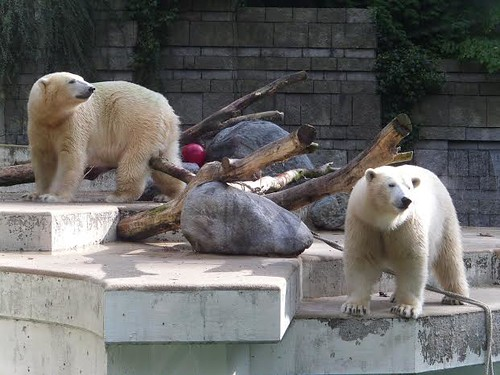 Anori und Luka, Zoo Wuppertal