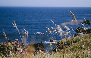 Image of Playa Mansa Mansa Beach near Punta del Este. ocean life summer beach nature landscape photography nikon fotografia nikond5100