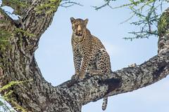 TANZANIA: Part 3 - Serengeti Days 2 and 3