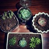Seven #succulents sitting in soil. Needs gravel on top. Http://succulentoasis.etsy.com Thanks @succulentoasis #plants #Manhattan #NYC
