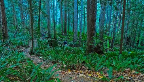 Descending the deep forest