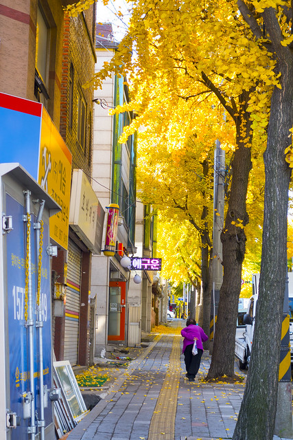 autumn #autumn #RX100M2 #Changyeong_dong #Incheon #가을 #창영동 #인천