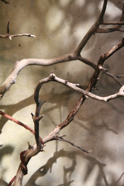 Abstract Branches Pattern