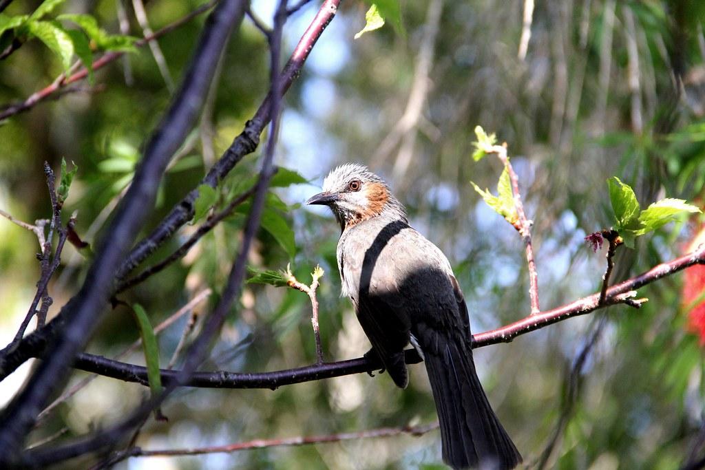 Bird in Okinawa