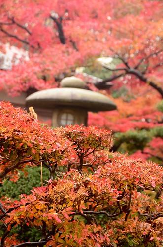 autumn40