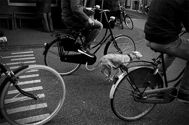 DoggieRide_Utrechtsestraat