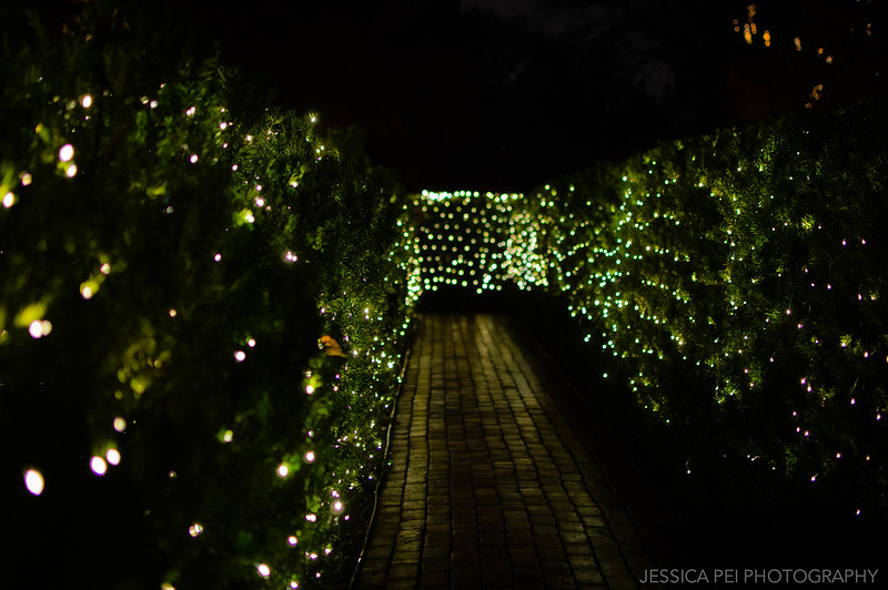 Hedge Maze in Garden Glow St. Louis