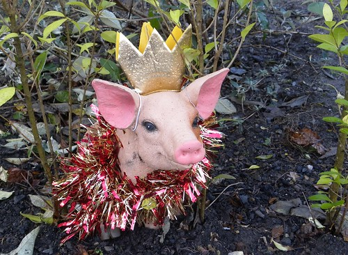 Pig in hedge