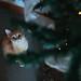 Christmas Cat by Silvia Sala