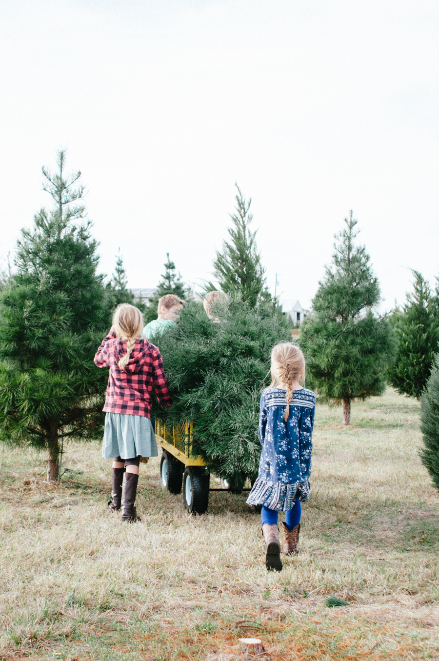 christmas_tree-3