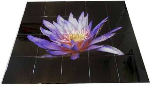 Purple Lilly 1