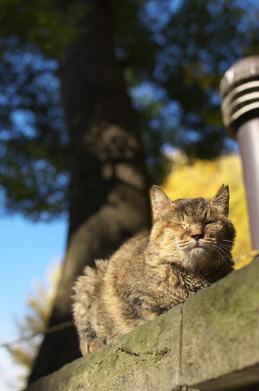 東京路地裏散歩 上野のネコ 2014年12月14日