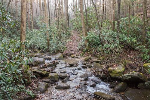 Coldspring Branch stream crossing #4