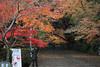 Photo:粟生光明寺-komyo-ji (女人坂) By 歲月之歌