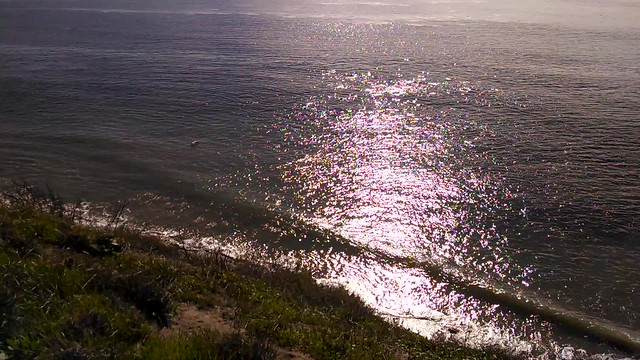 VID_20150107_113021779 pelican cruising beach water