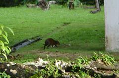Curioso animalito buscando su comida