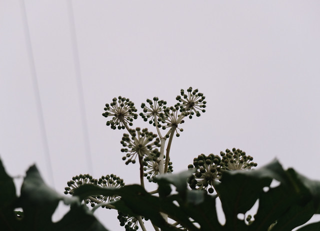 plant from low angle