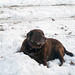 She loves a snow pile no matter how big or small by Woody Woodsman