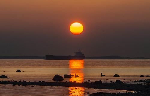 denmark sweden ships sunsets swans scania öresund hittarp
