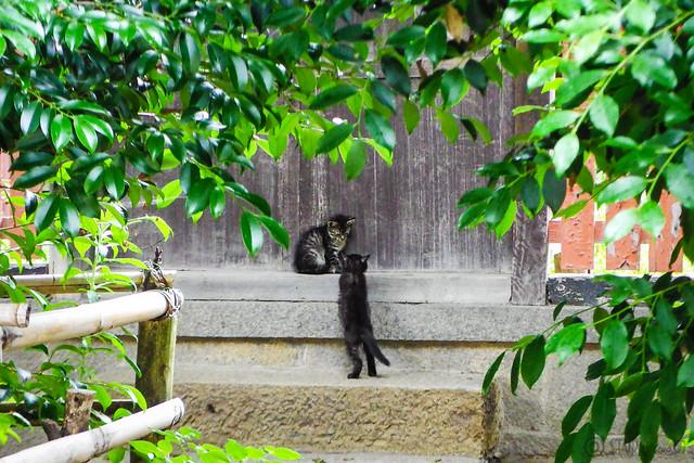 Today's Cat@2016-06-19